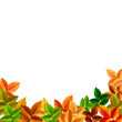 Beautiful Autumn Natural Background