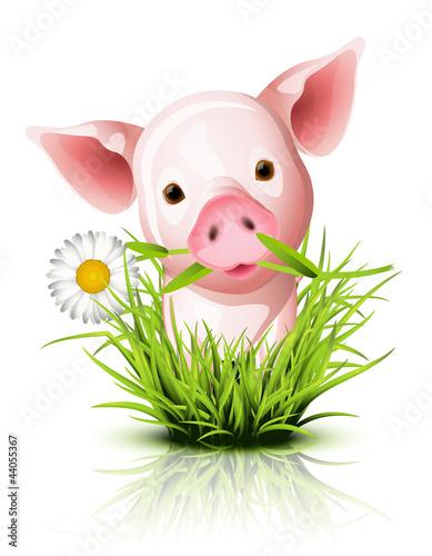 Fotobehang Boerderij Little pink pig in grass