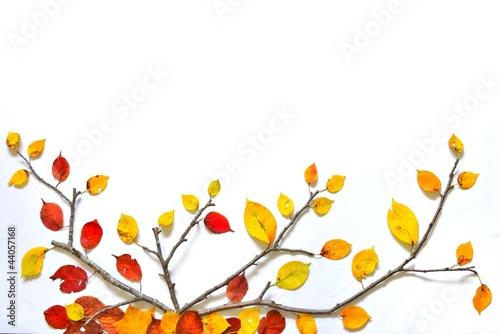 紅葉のアート A