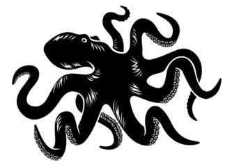 Big octopus