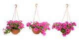 Fototapety Pink flowering
