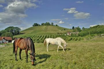Pferdeweide im Schwarzwald