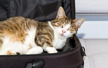 Katze in der Laptoptasche