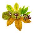 Arrangement mit frischen Kastanien auf Blättern