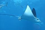 Fototapeta niebieski - ryba - Ryba
