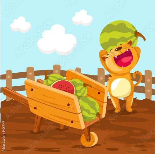 Cat holding watermelon