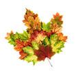 Bunte Herbstblätter als ein Blatt geformt