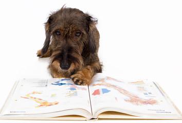 Bassottina con libro di geografia
