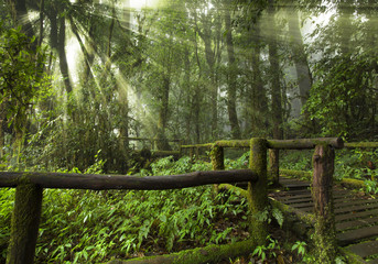 bridge road to the fog sunny jungle forest