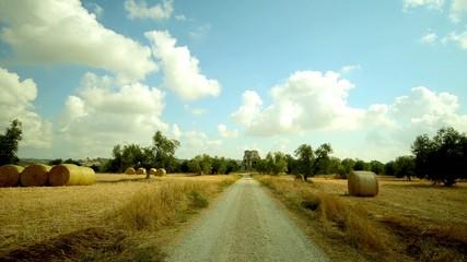 hay bales Tuscany field