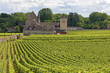 Vineyard in Bourgogne, cote de Nuits. France