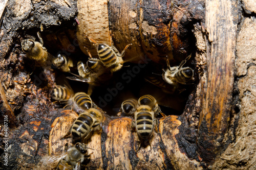 bees coming home, hive