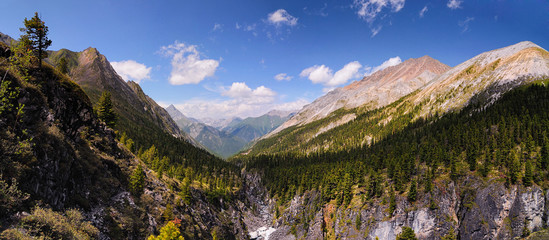 Siberian mountain forest