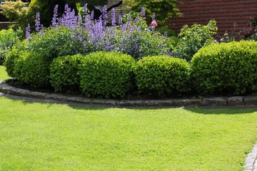 Buchsbaum im Vorgarten