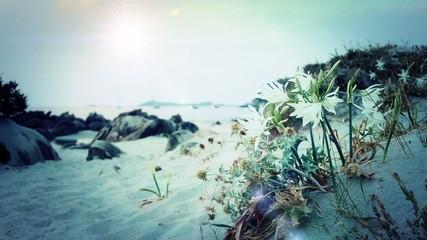 Spiaggia Mediterraneo gigli in fiore