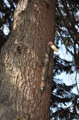 Wooden woodpecker on a tree.