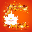 Maple leaves bright  background