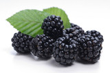 Blackberries with leaf