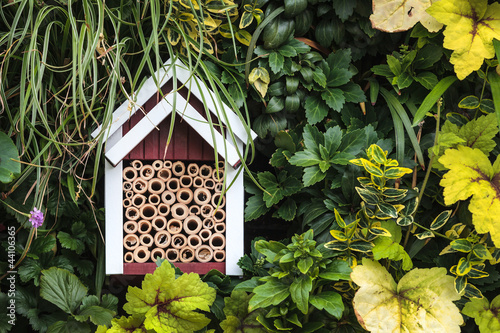 Insect shelter between garden plants