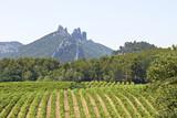 Fototapety Vineyard in Gigondas. Provence.