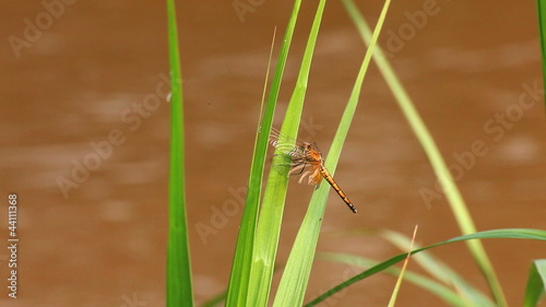dragonfly on grass leaf near river