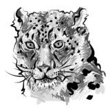 tiger - 44112511