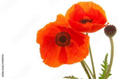Fototapeten,eye,floral,schweiss,foliage