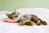 Fototapety Small Kitty