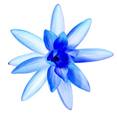 Blue water lily isolated on white with clipping paths
