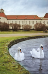 two swans at Nymphenburg castle , munich