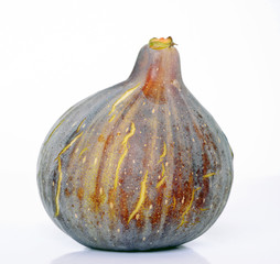 A single fig