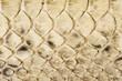 爬虫類のウロコ素材の背景