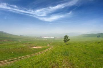 Grassland, trees and sky