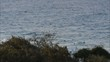 Buckelwale an der Gold Coast