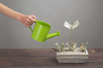 Making money - watering dollar-plants