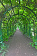 Green archway in a garden. Peterghof.St.Peterburg