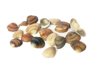 vintage color sea shells isolated on white background