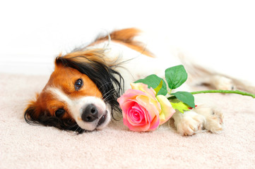 Dog Laying Down Beside a Pink Rose