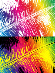 Rainbow colored feather