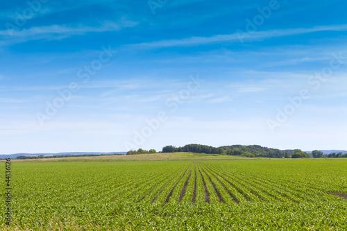 Fototapeten,full,ackerbau,staat,landschaft