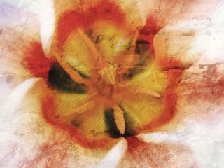 Tulpe auf Rauputz