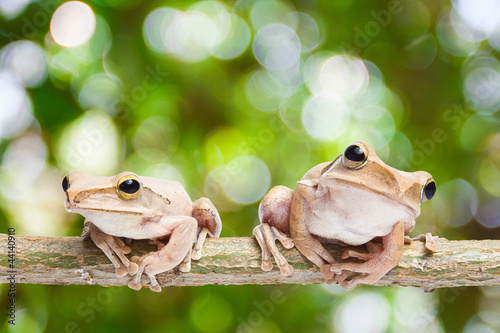 Two, frog on green bokeh background