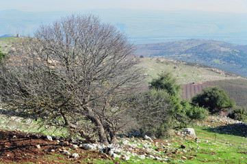Travel Photos of Israel - Galilee