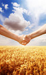 Farmers handshake at wheat field background.