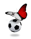 Concept - butterfly with Maltese flag flying near the ball, like