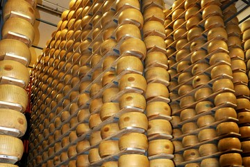 Large piles of parmesan cheese blocks on wooden shelves