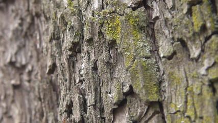 Beautiful ants on tree bark
