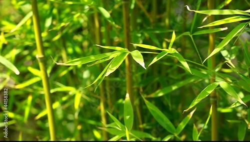 Papiers peints Bambou Bamboo forest background