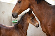 Protective Mare with foal
