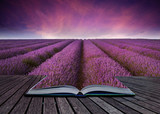 Fototapety Creative conceopt image of lavender landscape coming out of page
